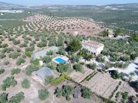 Farm apartment, pleasant, peaceful setting among Balbino's olive trees.