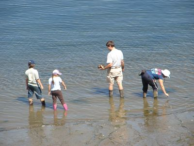 Guests exploring the beach.They spent a week at the cabin. Mostly on the beach!