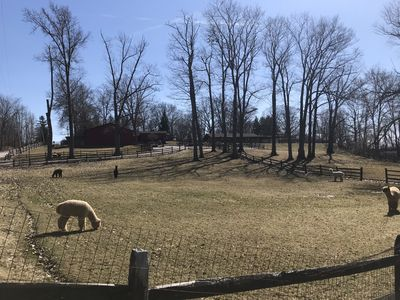 Photo for 5 acre Alpaca and hobby farm minutes from Kent