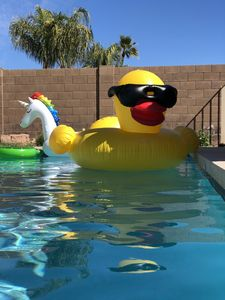 The giant duck and unicorn don't even come close to filling this pool!