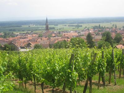 Photo for Gite on the wine route in peace with beautiful view of Kintzheim castle