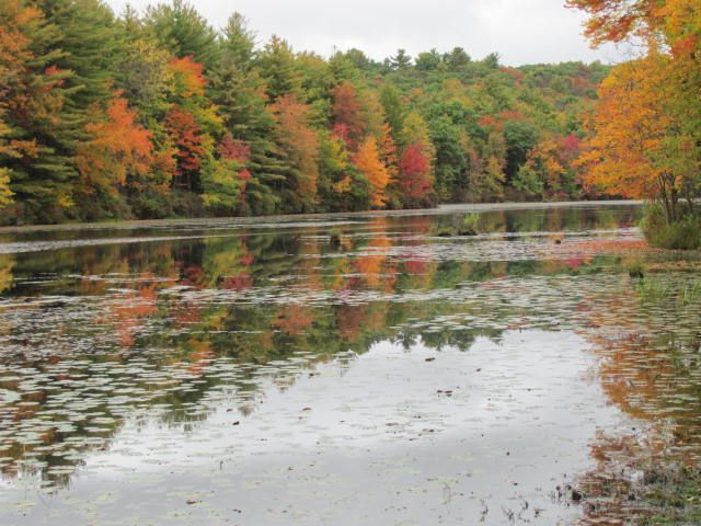 State Game Lands out the back door - HomeAway Hawley on state parks map, state forest land map, fishing map, blue marsh lake map,