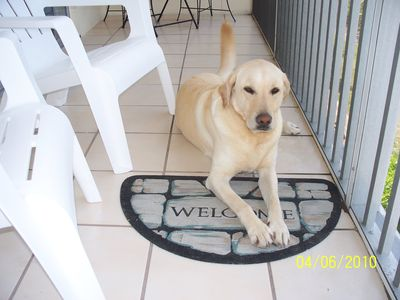 Photo for Pet Friendly with Gulfview
