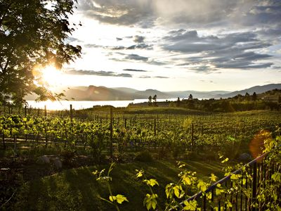 Photo for Gorgeous suite on Gjoa's Vineyard located in the heart of the Naramata Bench