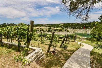 Vineyard - Take a walk and tour the vineyards that surround the property grounds.