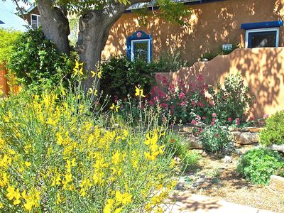 Street view with Spanish broom in bloom.  May is esp. gorgeous around La Casita.