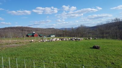 Photo for ~Counting Sheep~ at Weathered Hill Farm