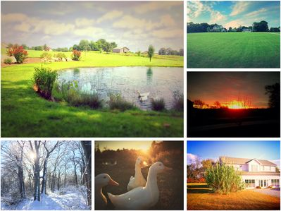 Some of the scenery of our property