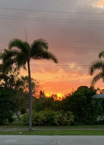 Photo for Beautiful setting on palm tree lined street, friendly neighborhood close to all.