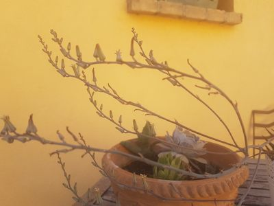 Photo for B & B in the Conero surrounded by greenery just steps from the sea
