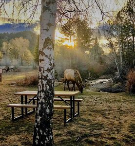 Photo for Estes Park 2B Luxury Condo on Fall River. Mtn. Views-WIFI-HDTV - River Views
