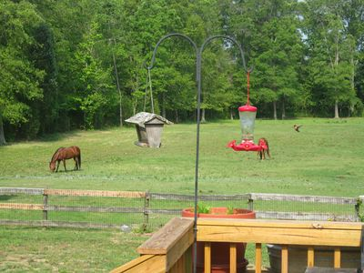 Back pasture from the deck.  Note humming bird approaching feeder!