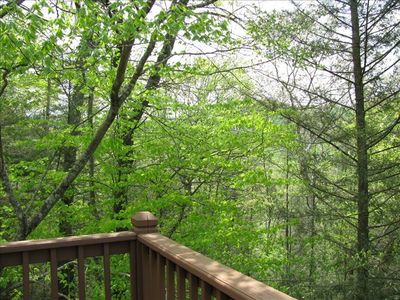 View from elevated back deck