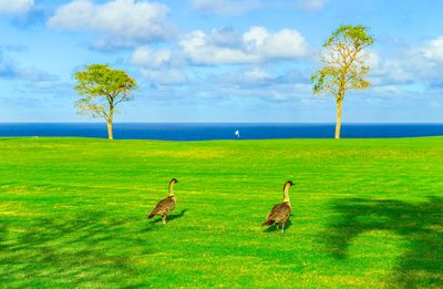 Photo for Enjoy Princeville at it's Finest!  Beautiful Golf Course & Ocean Views!