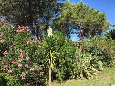Photo for VILLA WITH SWIMMING POOL IN PINEDE NEAR THE ALPILLES OF CAMARGUE SOUTH FRANCE