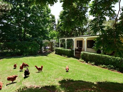 Enjoy the chickens visiting your private garden