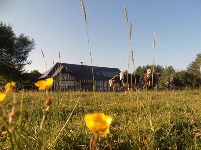 Photo for Press of Viette - House in Normandy - Cows meadows for neighborhood