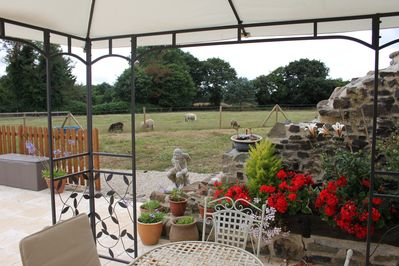 Our sheep grazing in the field behind the Terrace