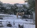 Winter in the Hill Country