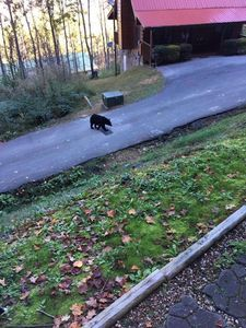 Long shot: Bear in the street.