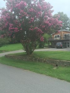 Crepe Myrtle in bloom in front of cottage from Street View