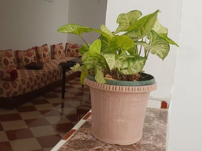 Photo for 1BR Apartment Vacation Rental in Martil, Tanger tetouan al hociema