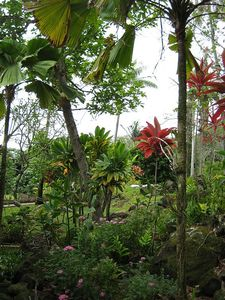 Photo for The Homestead -  Almost Two Acres of Lush Tropical Flora and Fauna