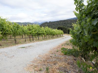 Photo for Two Bedroom Vineyard Farmhouse in Carmel Valley