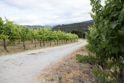 You'll take a short drive on a dirt & gravel road to get into the vineyard.