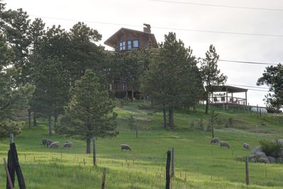View of house and sheep at pasture