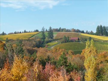 Wine Country Vineyard  & Winery Estate in the Dundee Hills Ava