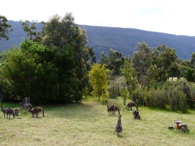 Photo for Accommodation among the wildlife…with views!
