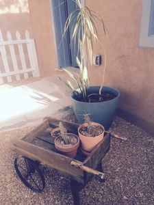 Southwest plantings are mixed in with weathered garden accessories.
