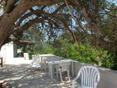 cool under the olive trees