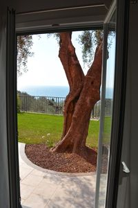 Photo for Agriturismo La Torretta - Sea View Apartment The great olive tree