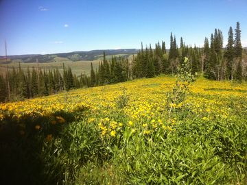 Your own ranch with endless views & activities near Jackson Hole