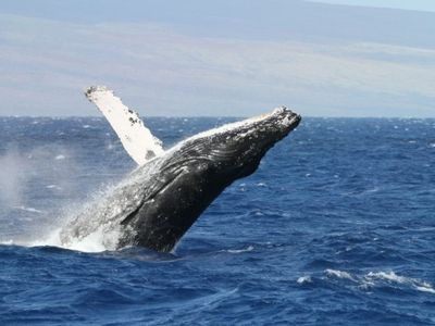 Photo for Whale Watch Adventure at Hildas Hideaway