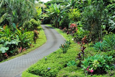 Driveway down to Bamboo Hideaway.