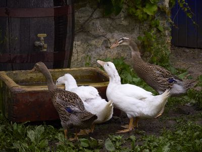 Photo for Lovely 18th Century Courtyard Cottage, Authentic Charm abides in Hidden Ireland!