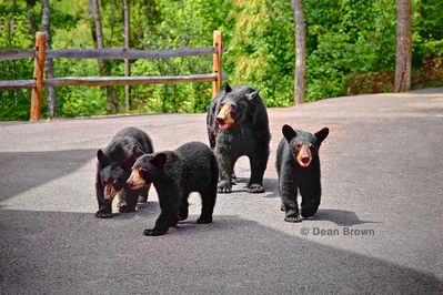 Our guest enjoy seeing the bears in Spring, Summer and Fall.