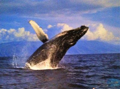 Whales and turtles can be seen from the beach, you can also take boat excursions