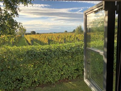 Looking out to the vineyard