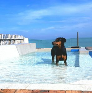 Photo for Home by the sea with freshwater pool for you and your dog
