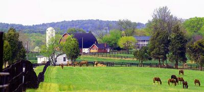 Photo for 7 Homes, One 600-Acre Farm = Perfect For Wedding/Reunion/Big Family Gathering