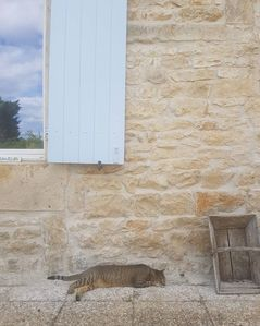 Photo for 2BR Cottage Vacation Rental in Vouleme, Nouvelle-Aquitaine