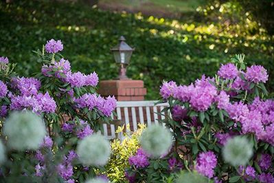 _SCS7727.RhododendronWinery