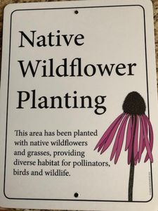 Every tree, shrub and wildflower is a Michigan native plant.