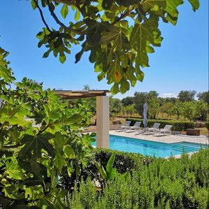 Photo for Villa with a 9000m2 garden with olive trees and fruit trees.