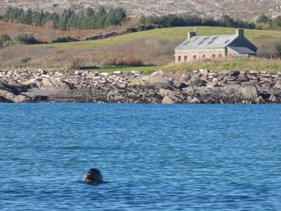 Pier Cottage with curious seal in the foreground!
