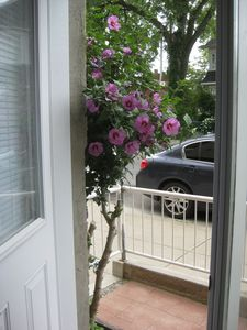 Looking out from the front door